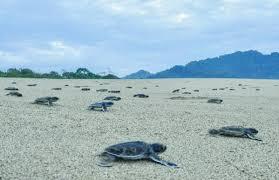 Pantai Sukamade