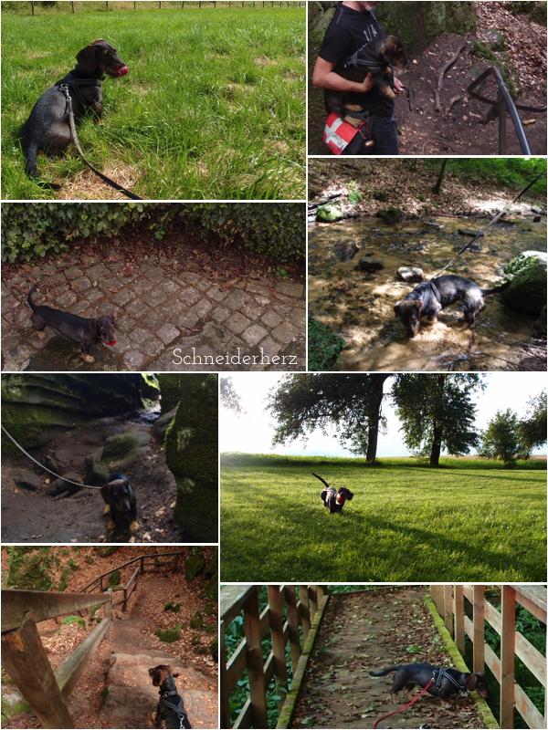 Urlaub Eifel mit Hund Ferienwohnung Hunde willkommen