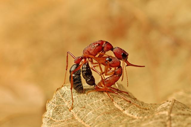 Green Pear Diaries, fotografía, Kalyan Varma, fotografía de vida salvaje