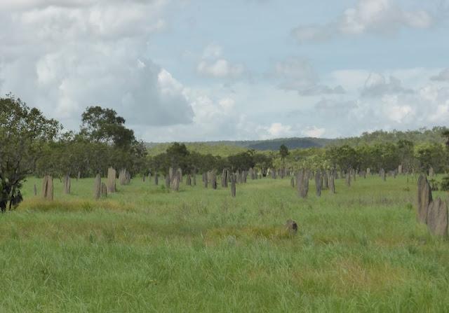 Magnetic termite mounds. Termiteros gigantes
