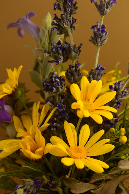 desert garden, small sunny garden, amy myers, photography, monday vase, argyranthemum, lavender goodwins creek gray