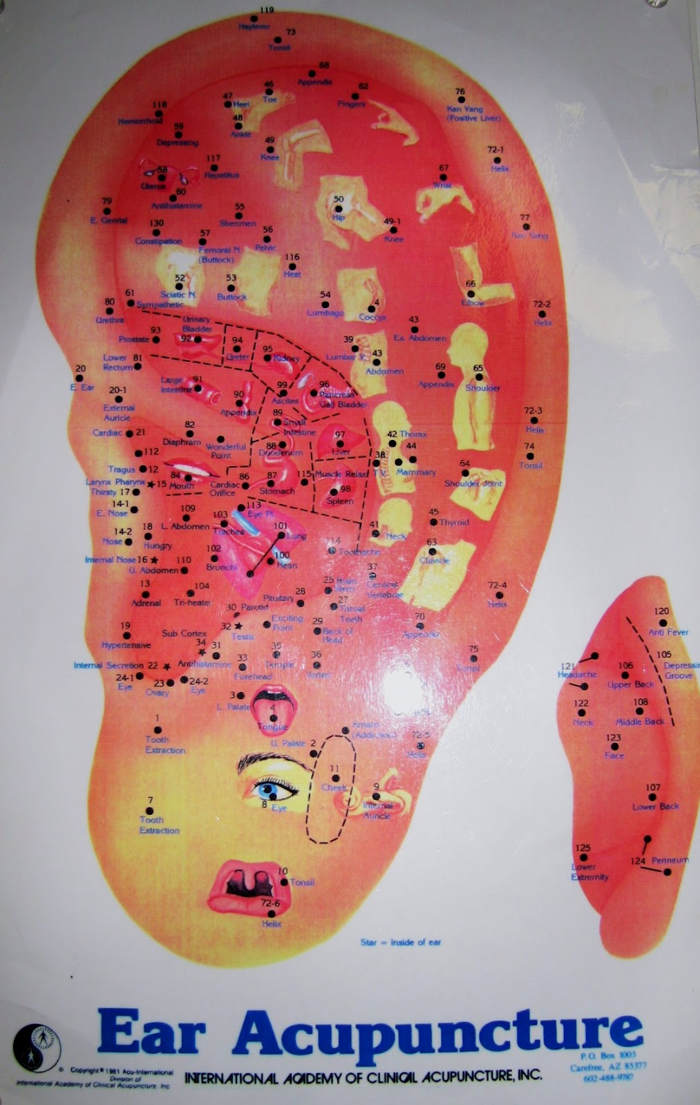 Chiropractic and Acupuncture Works