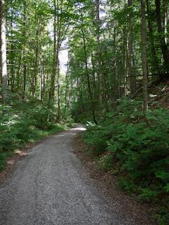 Östlicher Römerstraßen-Abstieg zur Isar südlich von Grünwald nahe Straßlach-Dingharting