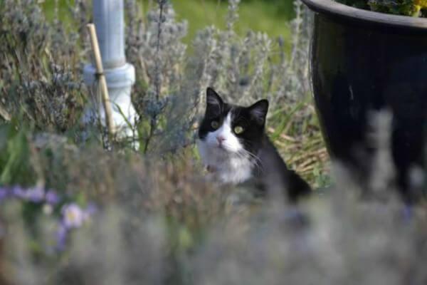 Γάτος έκανε το ταξίδι...Αθήνα-Ζυρίχη στη ρόδα αεροπλάνου και επέζησε!!!