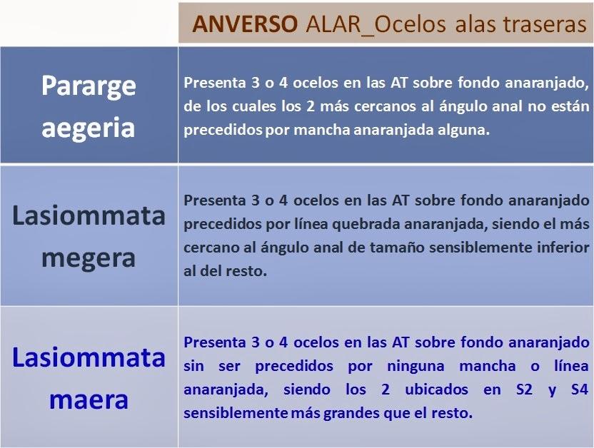 Ocelos anverso alas traseras de Pararge aegeria, Lasiommata megera y Lasiommata maera