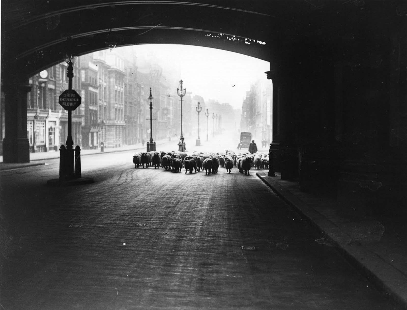 On Queen Victoria Street. 1937.