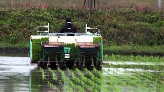 Penanaman padi modern