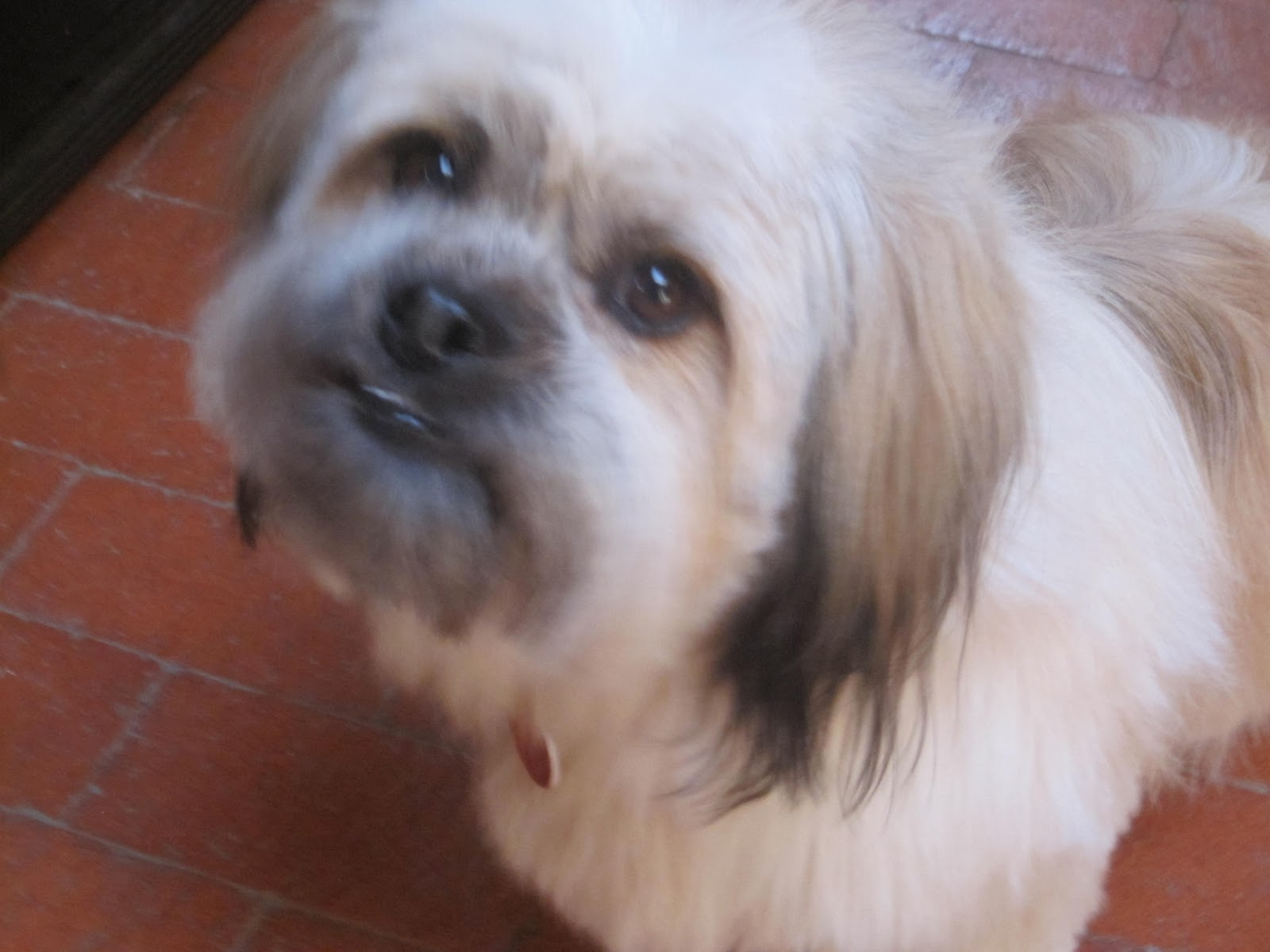 Gizmo: Discarded Dog Diary: #Gizmo helps by digging in the ...  Gizmo: Discarde...