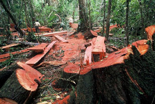 Akibat Penebangan Hutan Secara Liar dan Upaya serta Cara Mengatasi Kerusakan Hutan