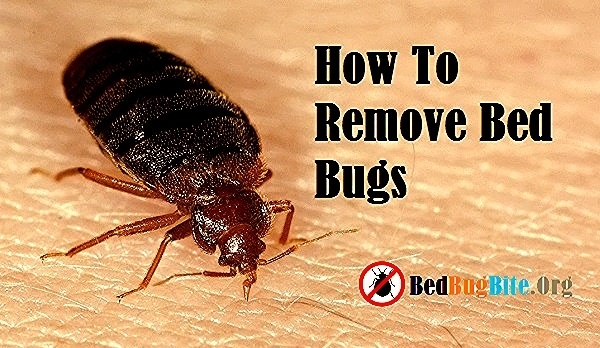 What Heat Can Bed Bugs Live In