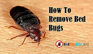 Remove-Bed-Bugs-From-Home