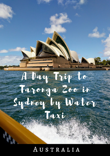 Pinterest Pin: A Day Trip to Taronga Zoo Sydney by Water Taxi