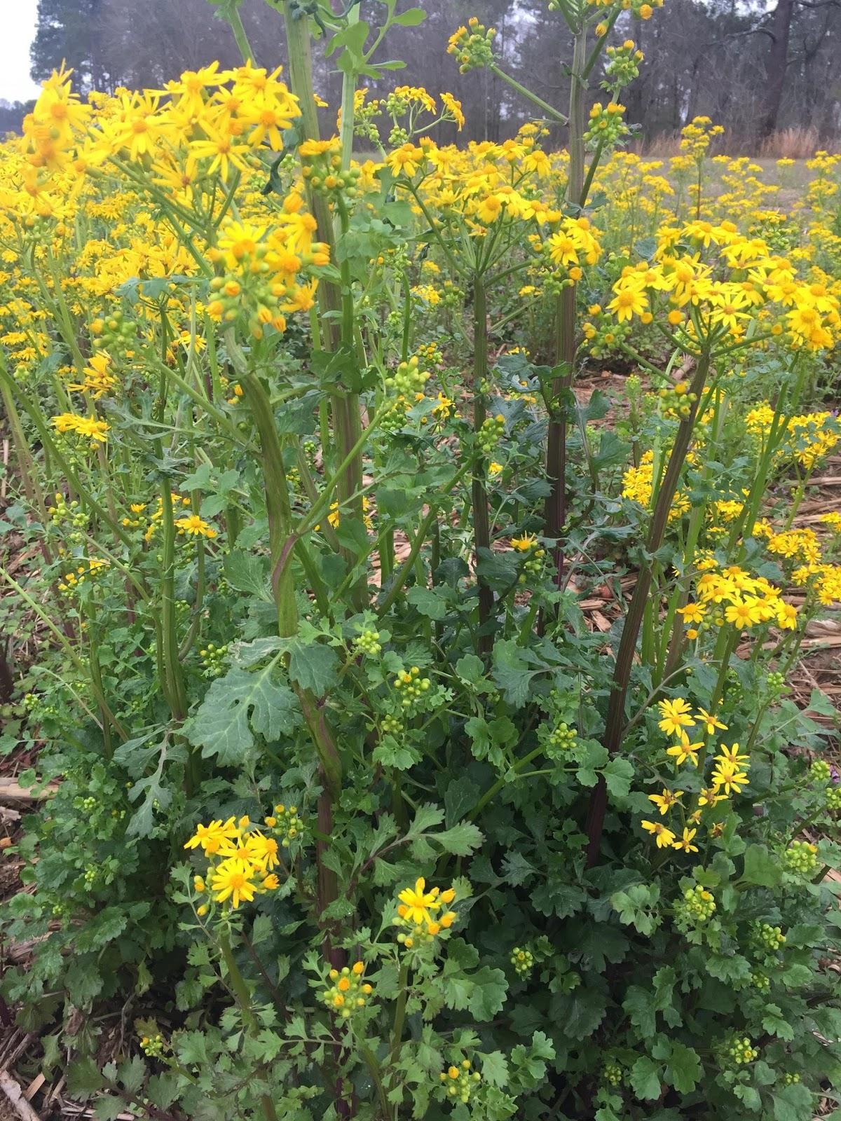 Georgia 4 Early Season Weed Considerations Agfax