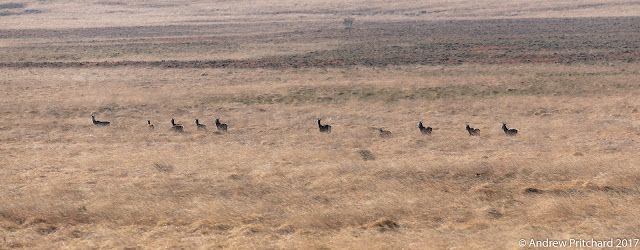 The larger group of deer alters course, to head away from the footpath deeper into the moorland.