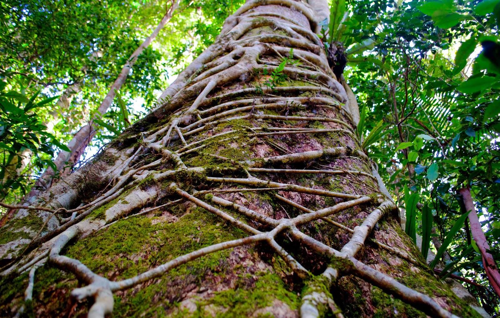 15 plants important to florida u0027s history phillip u0027s natural world