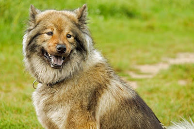Dog Obedience Training: The Options For Man's Best Friend