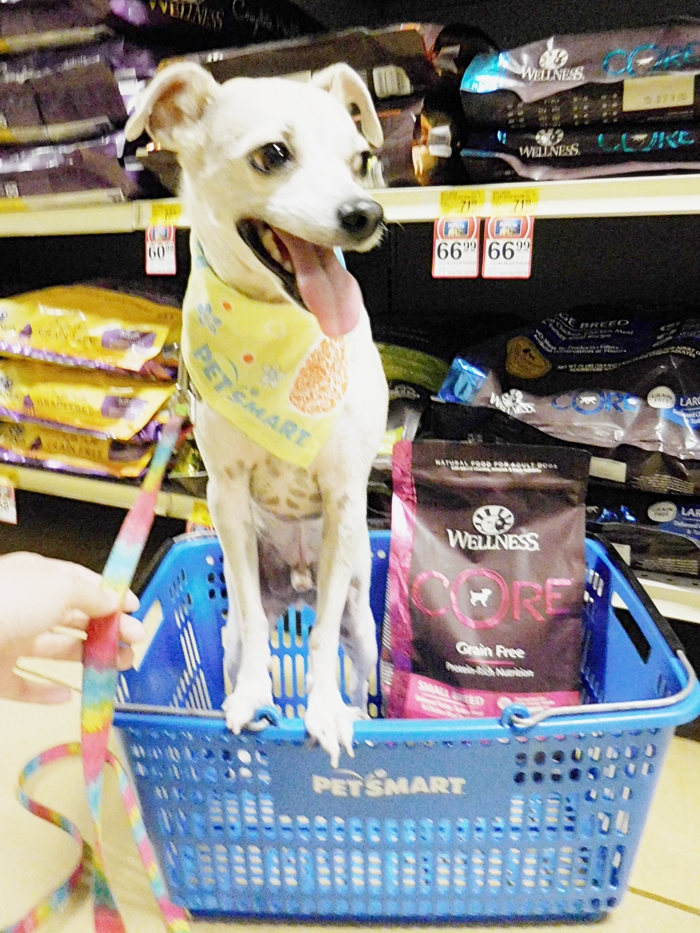 Finding The Wellness Difference with Wellness Core at PetSmart! #WellnessPet Dog Food Review