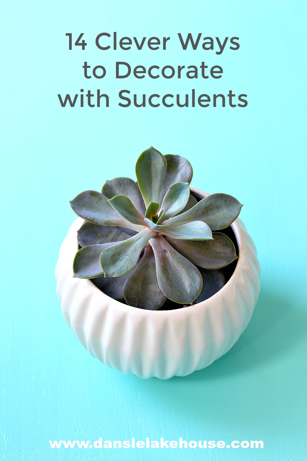 14 Ways to Display Succulents