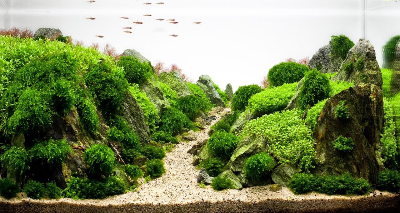 Một bố cục hồ thủy sinh ấn tượng có rêu Weeping sing