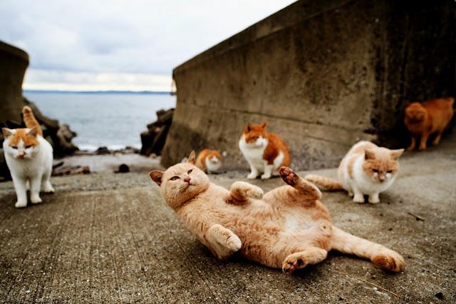 101 Nama Kucing Paling Populer Di Dunia