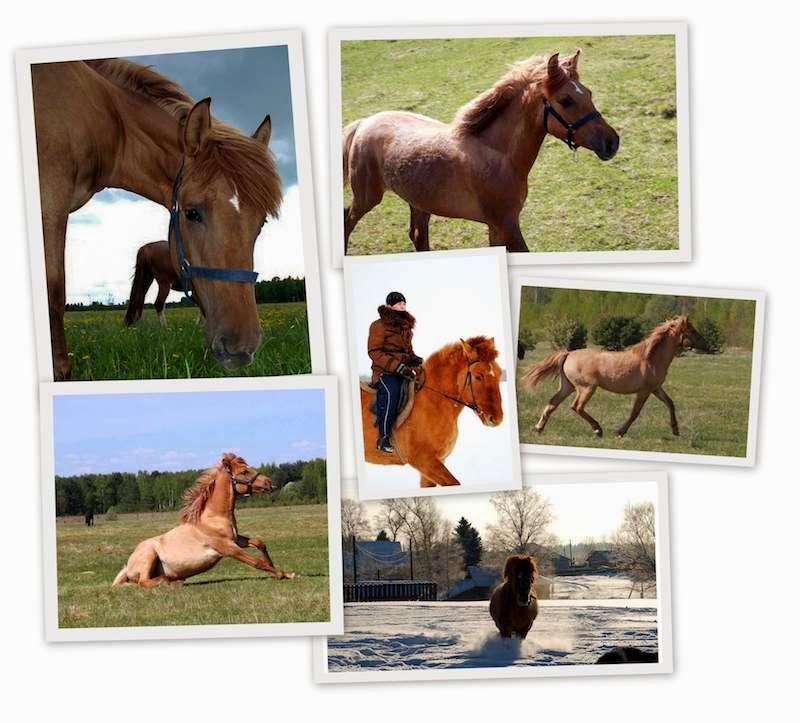 Варвара. Сенавиан, там где конные прогулки. Лошади в Тверской области.