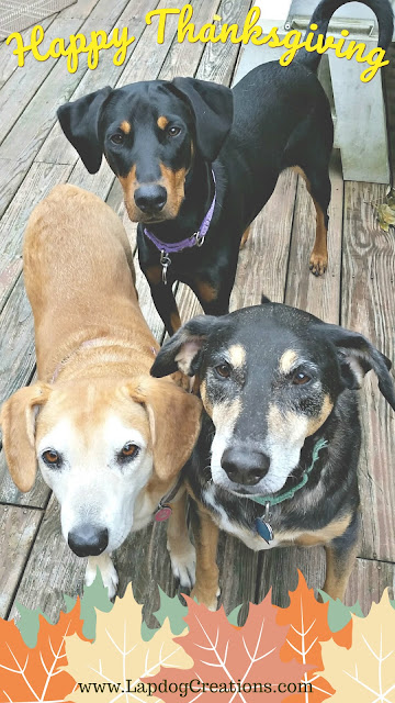 thanksgiving rescue dogs adopt mutt doberman beagle shepherd