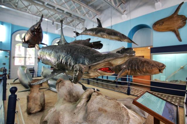 Sala marina del Museo de Historia Natural de Mauricio