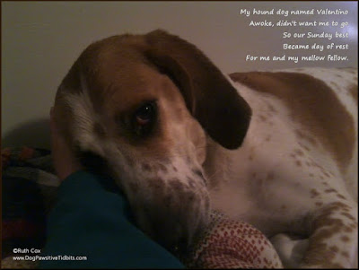 Sunday Dog Limerick Poem