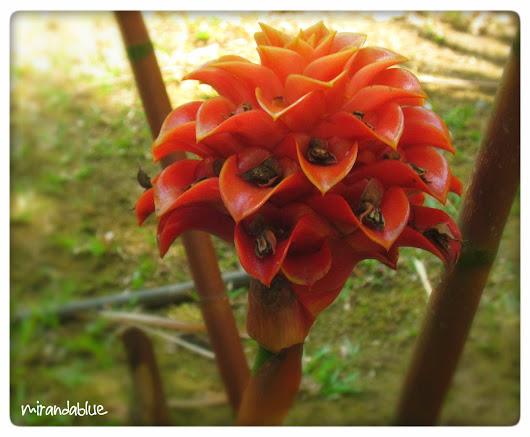Live in the Moment: Bromeliad or Ginger?