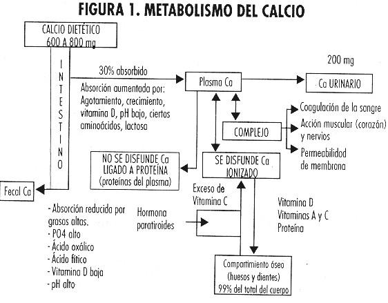 Theobroma: Propiedades del cacao