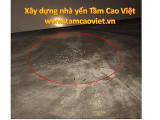 phan-chim-nha-yen-anh-toan-q12-tphcm