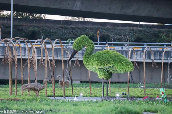 台中霧峰|台中花博城市綠廊|好食光花海|丁台公園|香米|白鷺鷥|亞洲大學旁