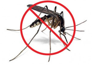 Cegah nyamuk Demam Berdarah