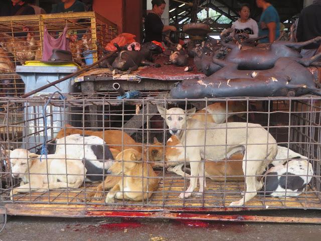 Zoonosis di Sulawesi Utara