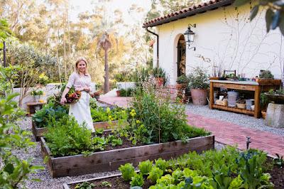 ปลูกผักสวนครัว