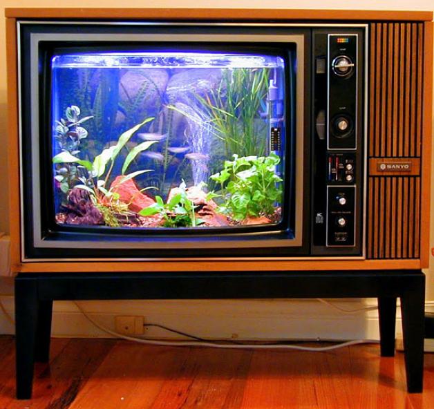 Upcycle Us: Upcycled fish tank