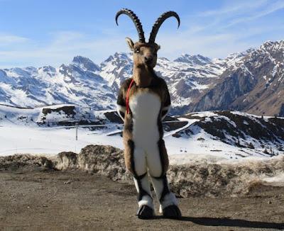 Las cabras monteses de Beceite ya caminan a dos patas