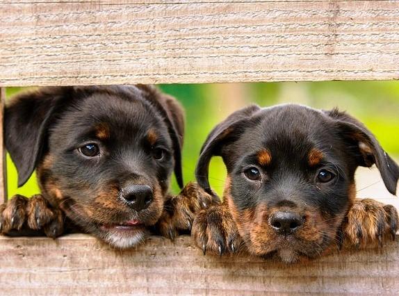 Contoh Cerita Dongeng Binatang tentang Anjing dalam Bahasa Inggris
