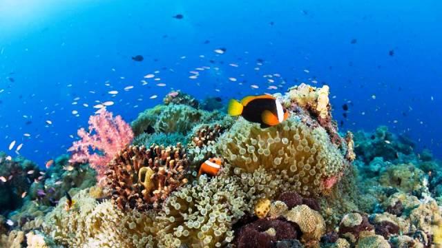 ท่องเที่ยว, แนวหินปะการัง, มัลดีฟส์, สถานที่ดำน้ำ, สถานดำน้ำทั่วโลก, อันดับสถานที่ดำน้ำ, ปาปัวนิวกินี (Papua New Guinea)