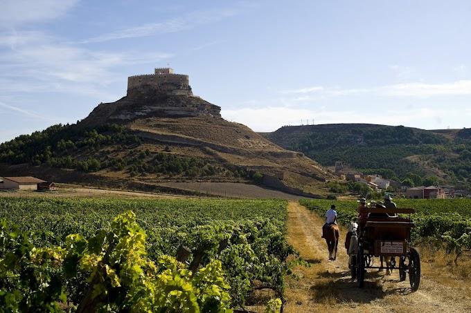 Entre Castillos y  Paisajes de  Viñedos