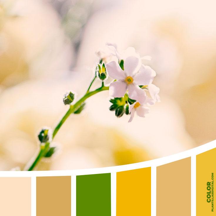color_372