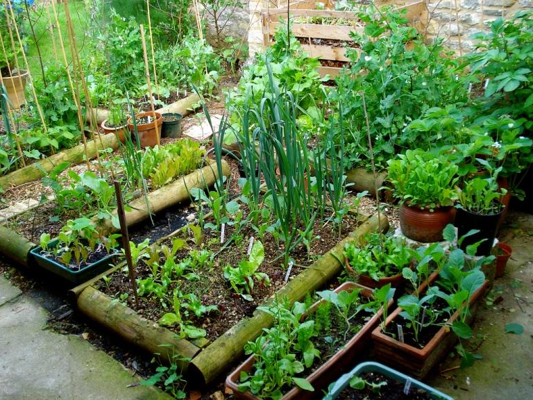 Ewa In The Garden 24 Beautiful Photos Of Edible Landscape Ideas