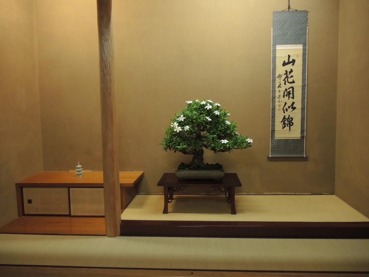 Katsura Leaf Bonsai Tokonoma Trials