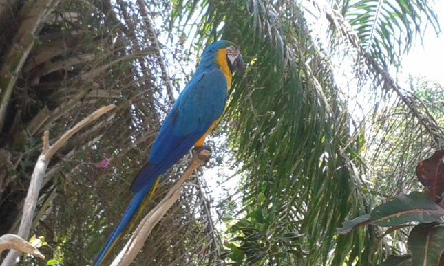 Bali Bird Park And Rimba Reptiles