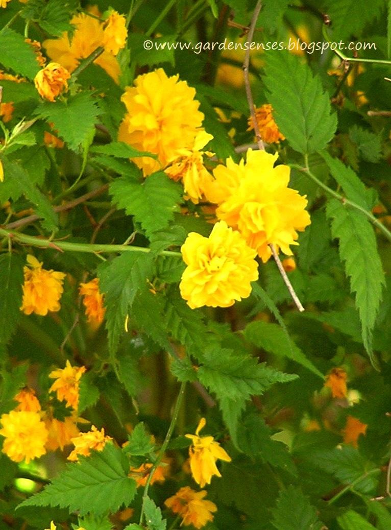 Garden Sense Spring Blooms Iii Beyond Azaleas