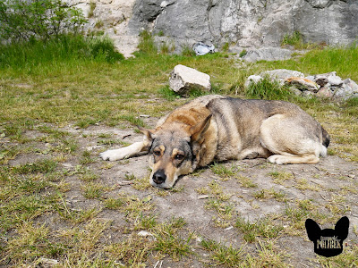 pes na výletě