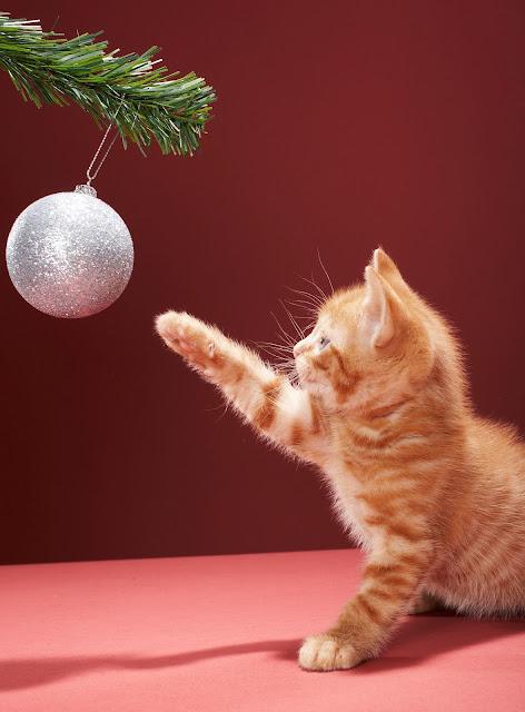 Árvore de natal ideal para donos de pets