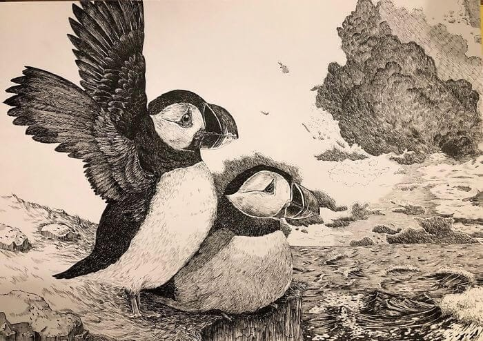 06-Two-Puffins-WIP-Bas-Geeraets-Black-and-White-Drawings-of-Birds-www-designstack-co