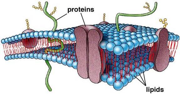 ib biology syllabus 2014 pdf