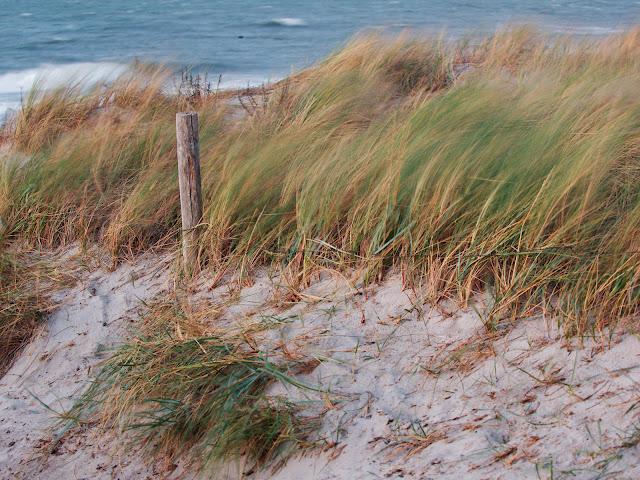 Der kräftige Wind zerrt am Strandhafer